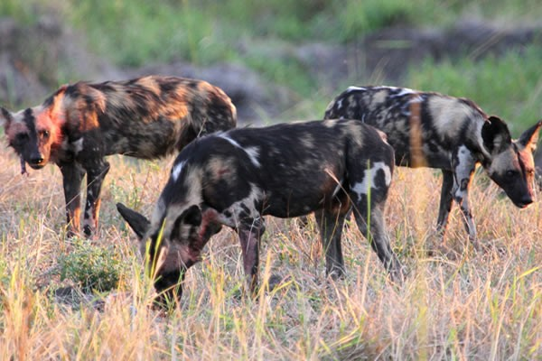 Wilddog Group