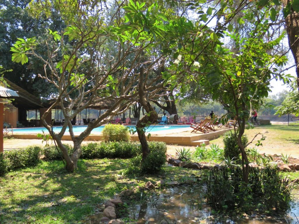 Croc Valley Camp Garden