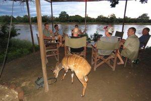 Bush Buck at Bar