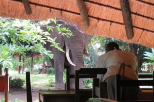 Elephant Dining Room