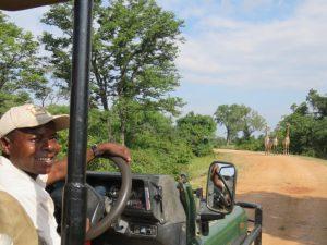 South Luangwa Game Drives Giraffes