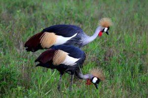 Birds South Luangwa
