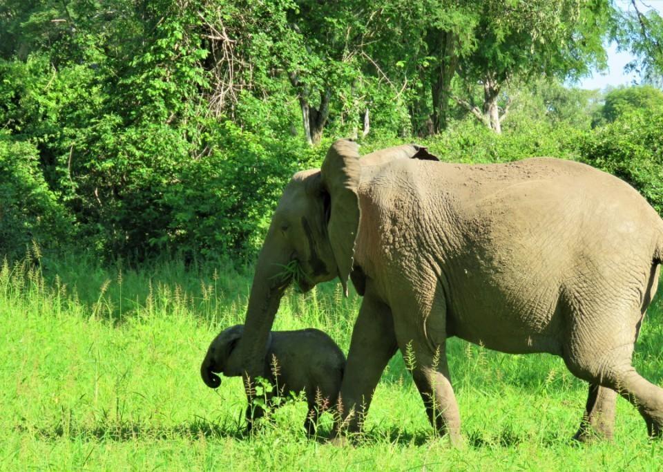 Elephants Green Season