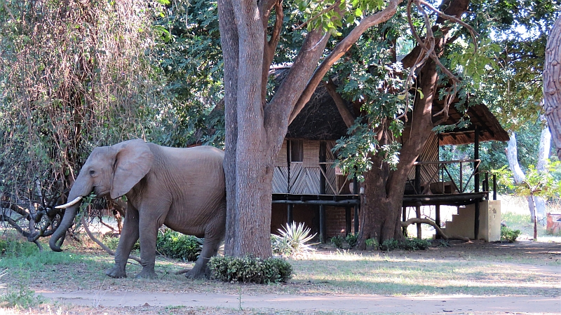 Safari Accommodation South Luangwa