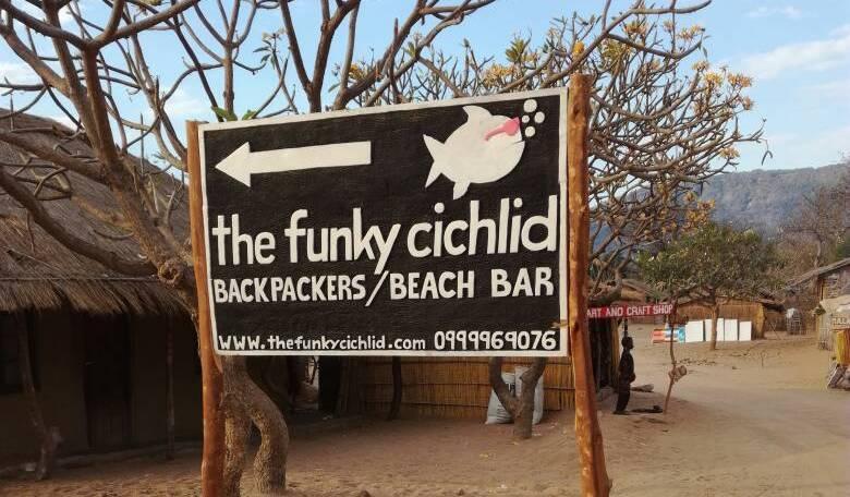 Funky Cichlid