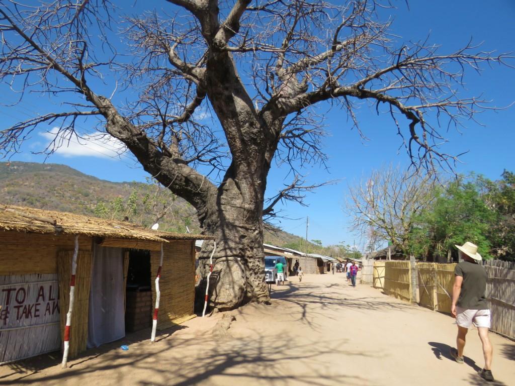 Cape Maclear Baobab