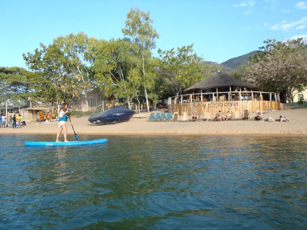 Funky Cichlid Lake Malawi