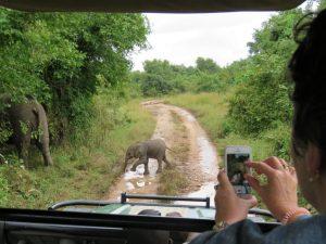 South Luangwa Baby Elephant