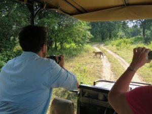 South Luangwa Game Drive Leopard