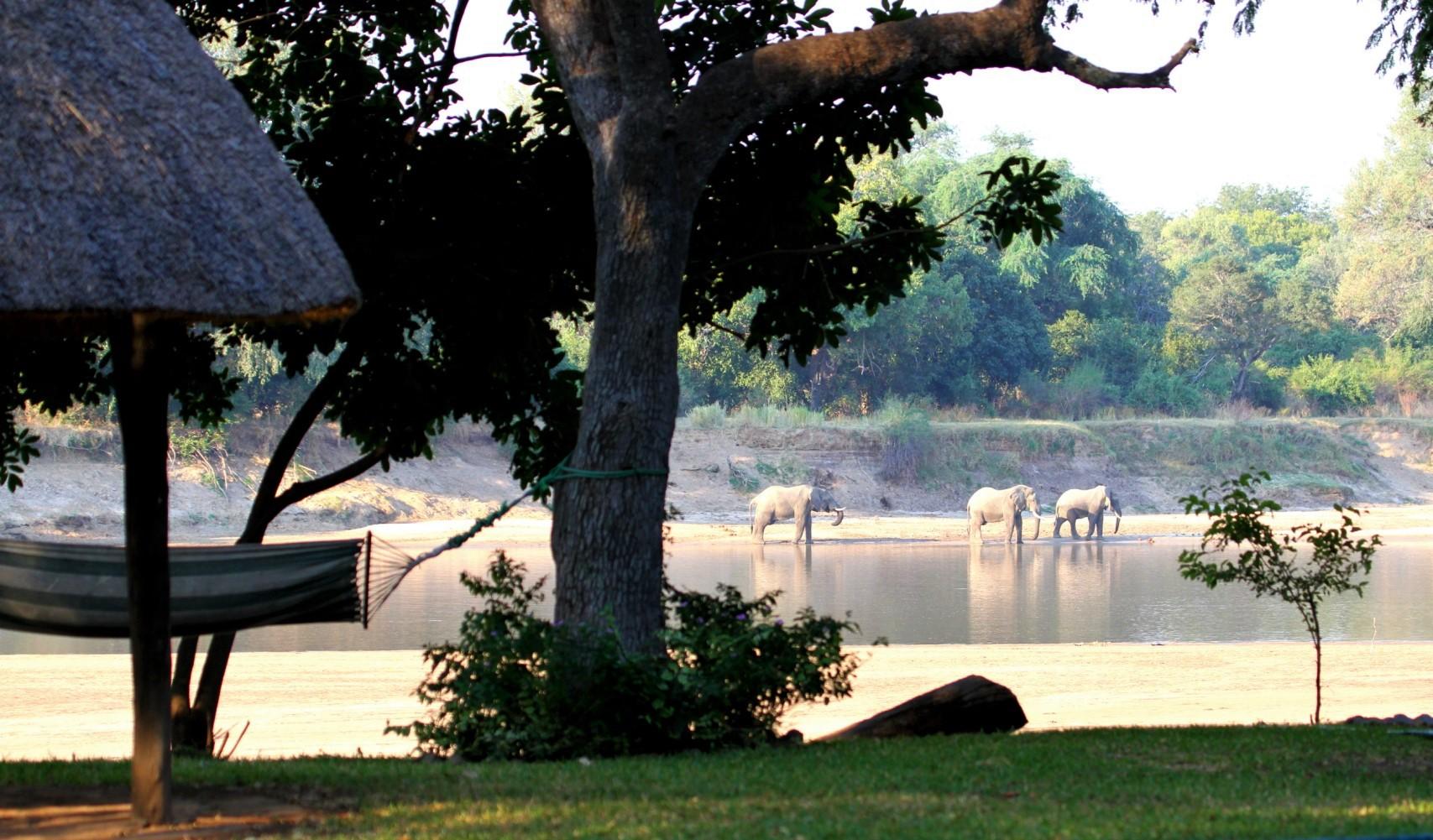 Camping Luangwa River
