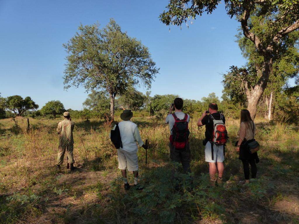 Walking Safari South Luangwa Zambia