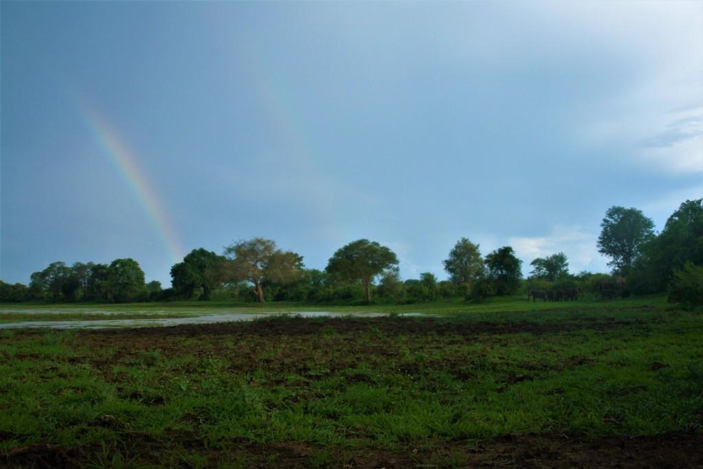 Rainbow Green Season South Luangwa