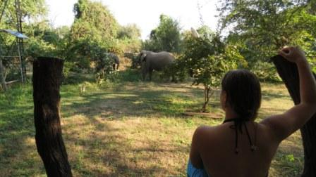 Volunteering South Luangwa