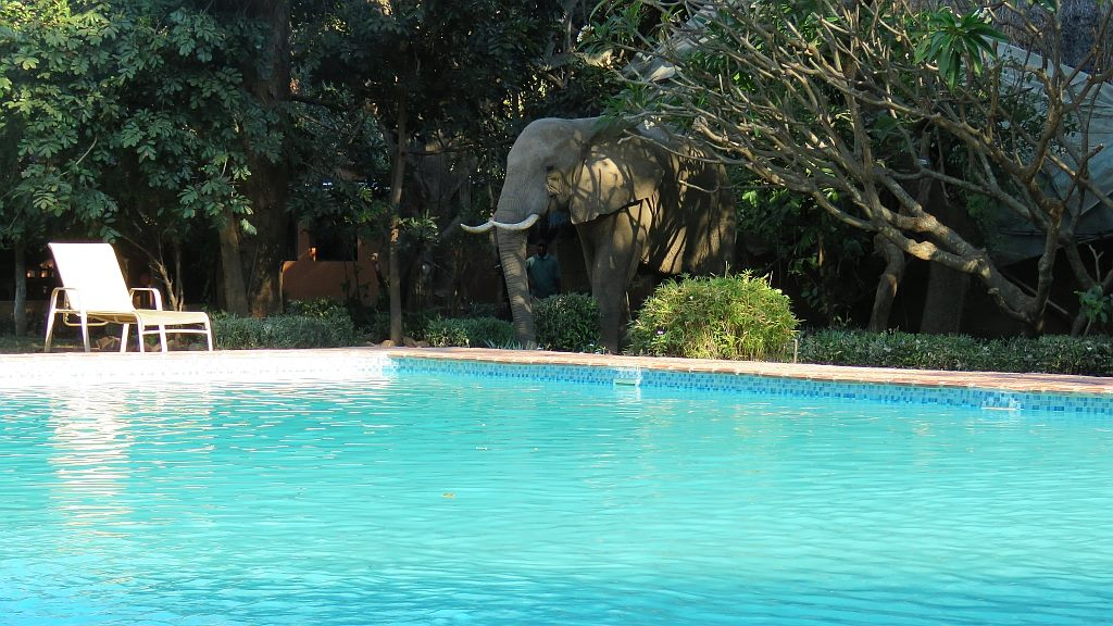 Elephants Swimming Pool