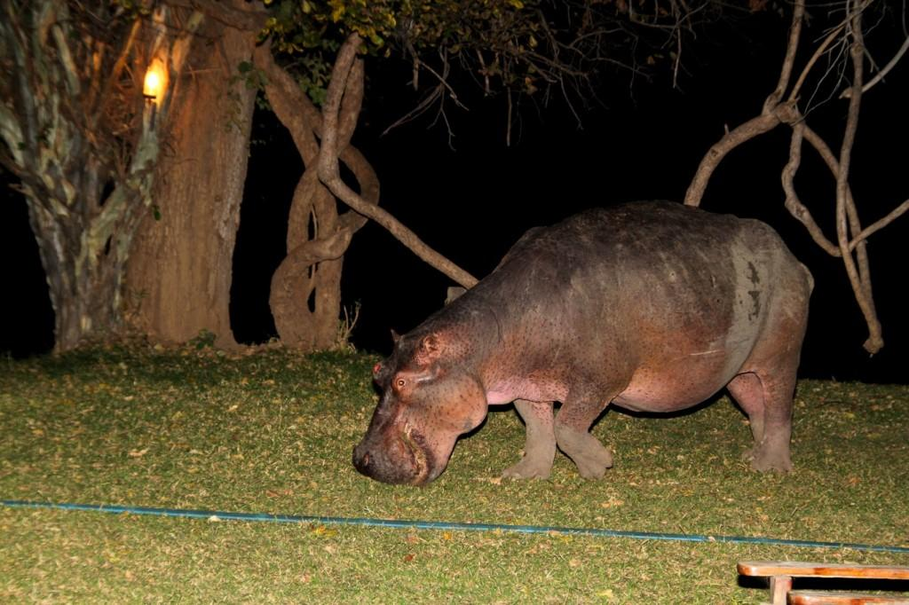 Hippo Croc Valley Camp