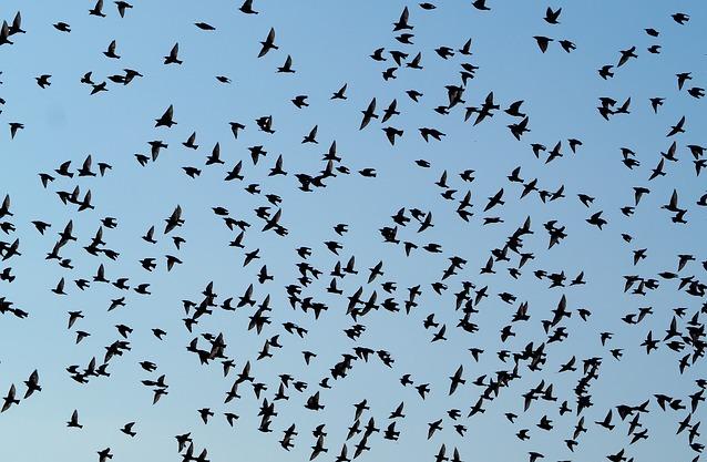 birds-2799993_640